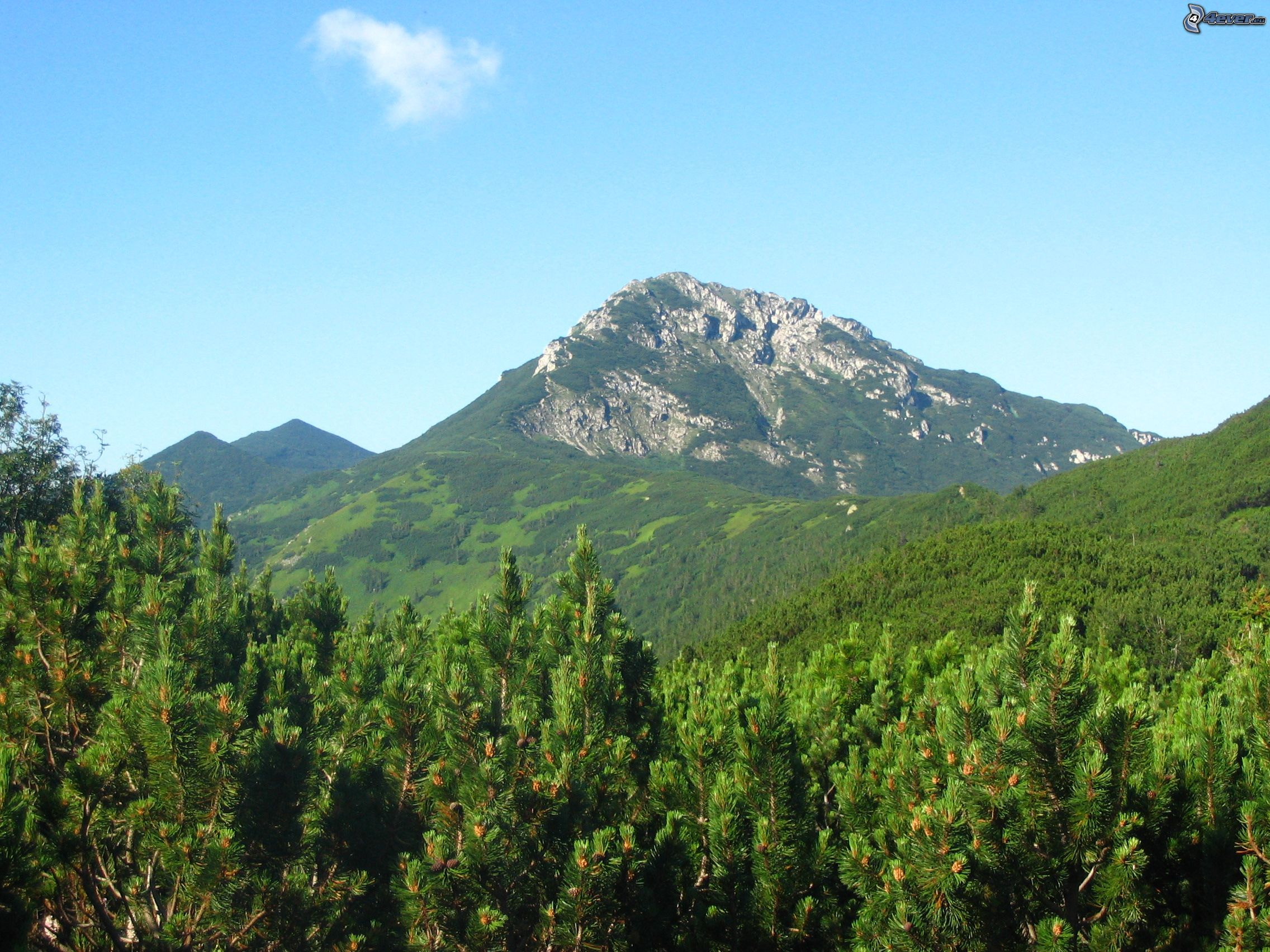 hill-rocky-hill-mountain-pine-forest-147365